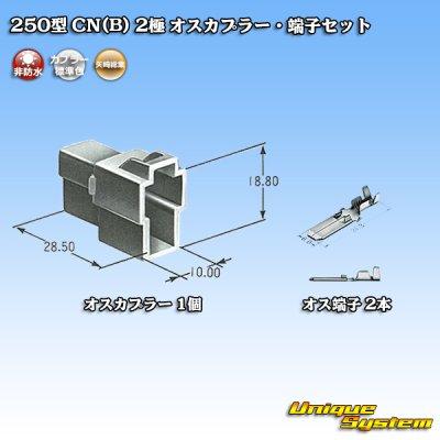 画像5: 矢崎総業 250型 CN(B) 2極 オスカプラー・端子セット
