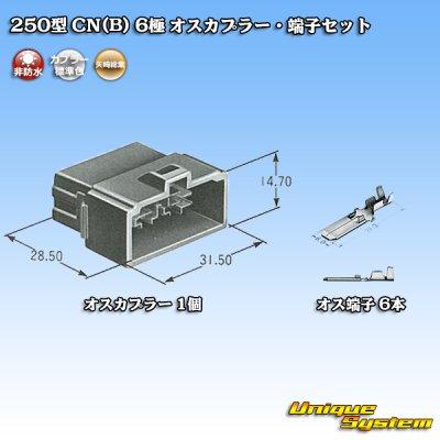 画像5: 矢崎総業 250型 CN(B) 6極 オスカプラー・端子セット