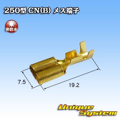 画像2: 矢崎総業 250型 CN(B) メス端子
