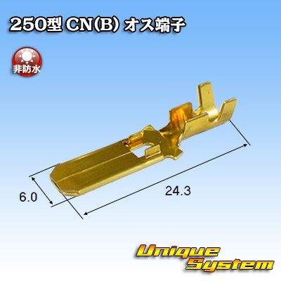 画像2: 矢崎総業 250型 CN(B) オス端子
